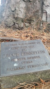 The plaque on the Canary Island pine tree.